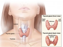 Thyroid Overview